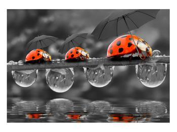 Obraz lienok sedembodkových s dáždnikmi (K012059K10070)