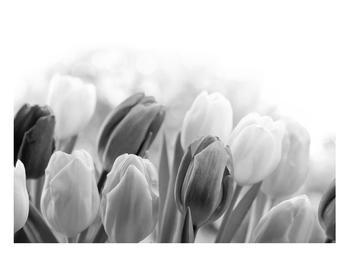 Černobílý obraz pučících tulipánů (K012127K10070)