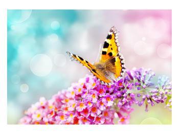 Obraz motýla na květech (K012351K10070)