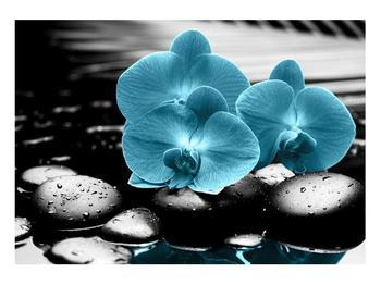Tablou cu flori de orhidee albastre (K012398K10070)