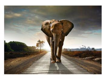 Tablou cu elefant (K012479K10070)