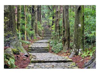 Obraz kamenných schodů v lese (K014268K10070)