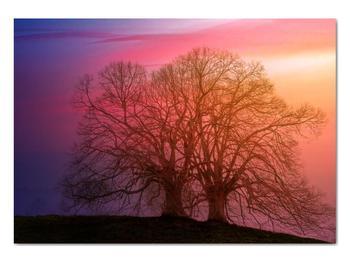 Obraz stromov v hmle (V020088V10070)