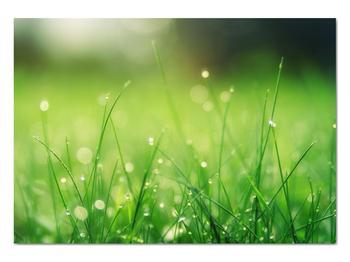 Obraz - rosa na tráve (V020169V10070)