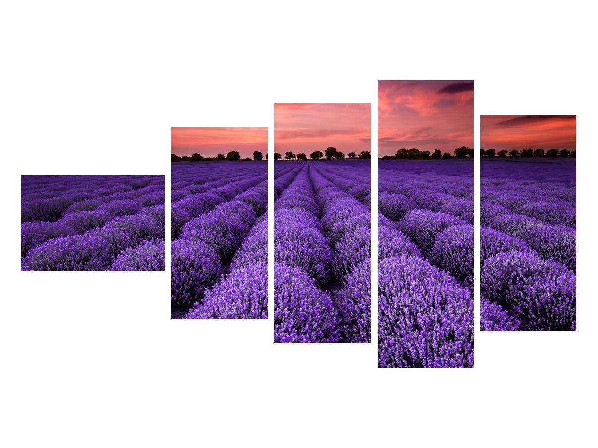 Slika polja lavande (K014685K11060)
