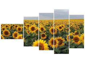 Obraz slunečnicového pole (F000397F11060)