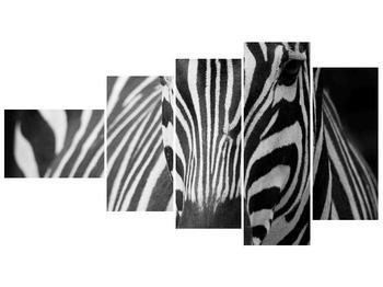 Obraz černobílého detailu zebry (F000715F11060)