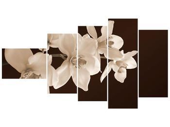 Krásný obraz bílých květin (F001888F11060)