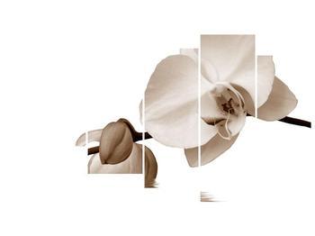 Krásný obraz bílé orchideje (F001900F11060)