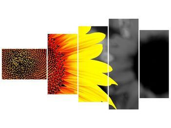 Obraz květu slunečnice (F002400F11060)