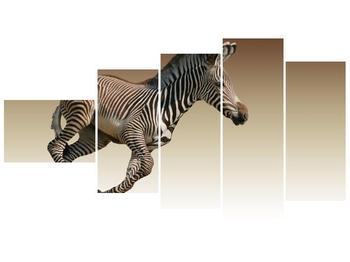 Obraz běžící zebry (F002416F11060)