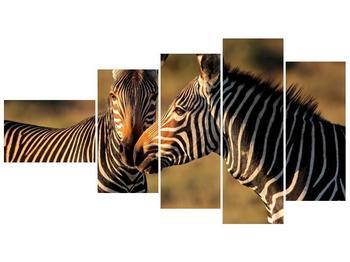Obraz dvou zeber  (F002641F11060)