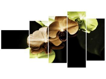 Obraz hnědých a zelených orchideí  (F002723F11060)