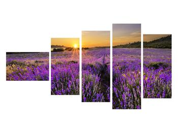 Tablou cu câmp de levandă (K011154K11060)