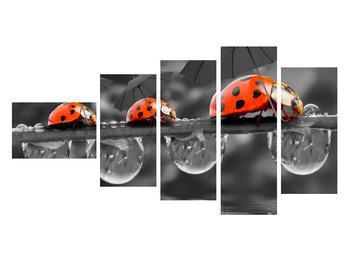 Obraz lienok sedembodkových s dáždnikmi (K012059K11060)
