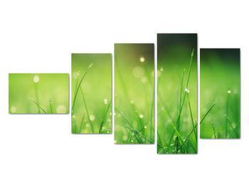 Obraz - rosa na tráve (V020169V11060)