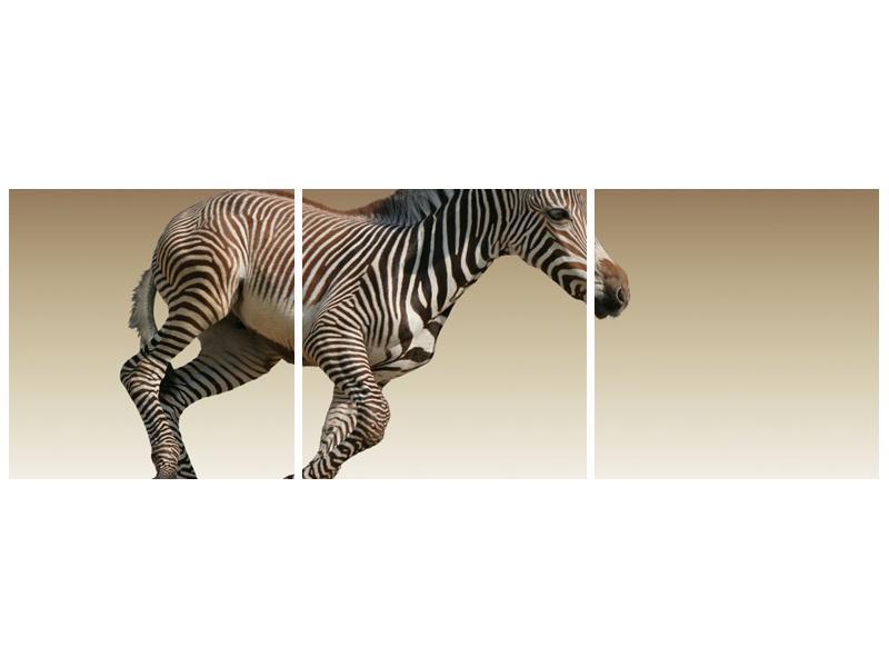 Obraz běžící zebry (F002416F12040)