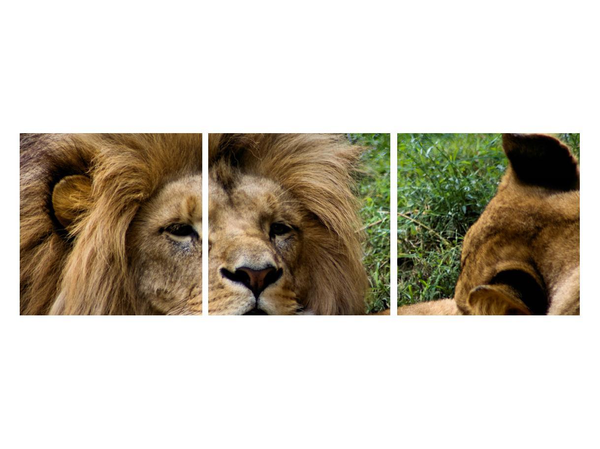 Moderna slika K010143K12040 (K010143K12040)