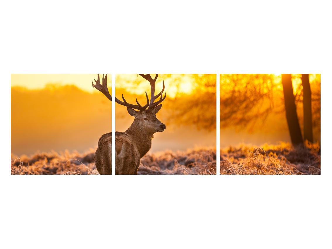 Slika jelena (K011281K12040)