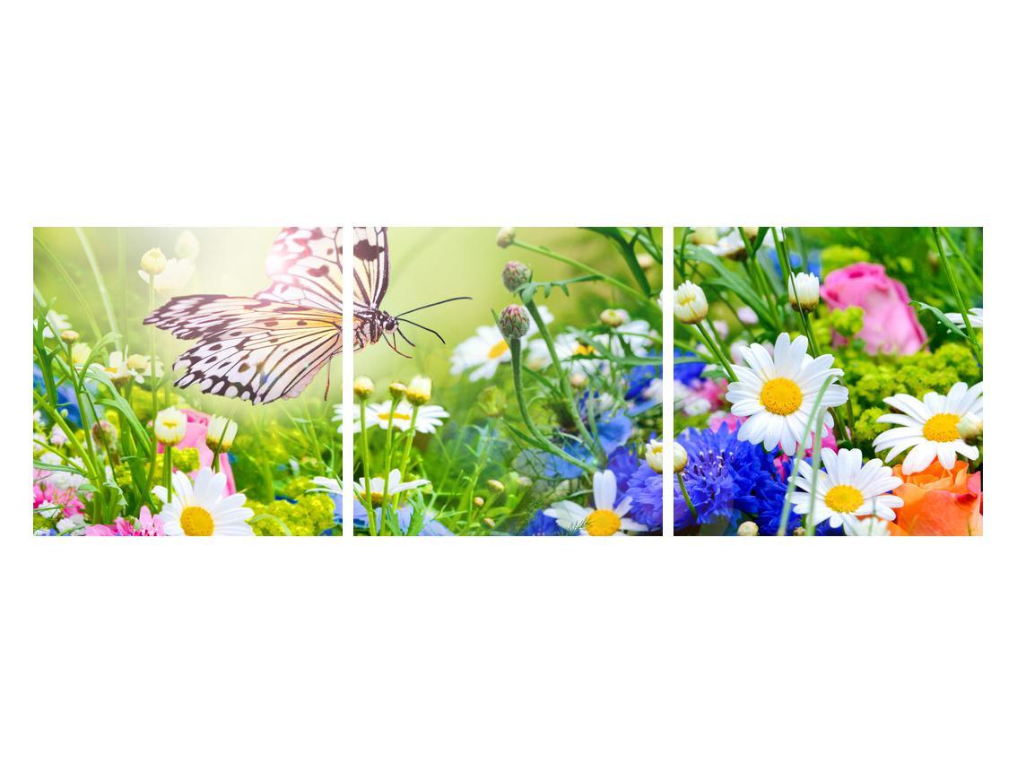 Slika poletnih cvetov z metuljem (K012220K12040)