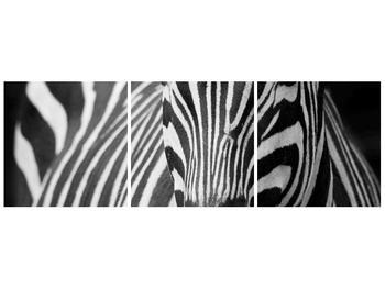 Obraz černobílého detailu zebry (F000715F12040)