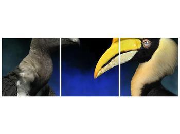 Obraz ptačích zobáku (F001358F12040)