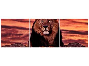 Obraz krále zvířat (F001507F12040)