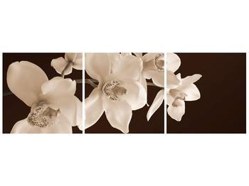 Krásný obraz bílých květin (F001888F12040)
