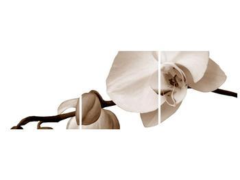 Krásný obraz bílé orchideje (F001900F12040)