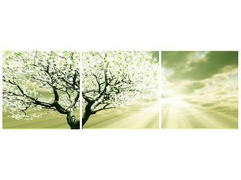 Obraz stromu na jaře (F002291F12040)