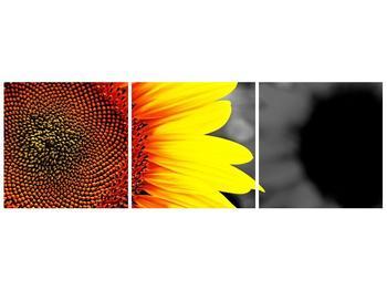 Obraz květu slunečnice (F002400F12040)