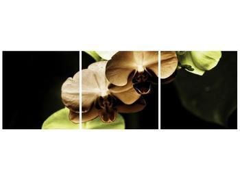 Obraz hnědých a zelených orchideí  (F002723F12040)