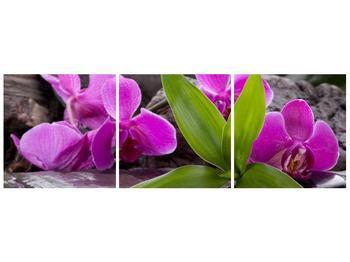 Obraz fialových orchidejí s listím (F004027F12040)
