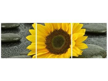 Moderní obraz F005794F12040 (F005794F12040)