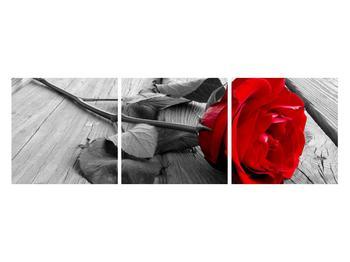 Obraz rudé růže (K011138K12040)