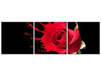 Obraz ruže (K011216K12040)