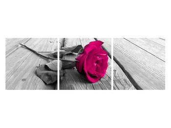 Obraz růže (K011856K12040)