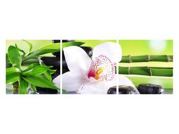 Obraz orchidee (K011995K12040)