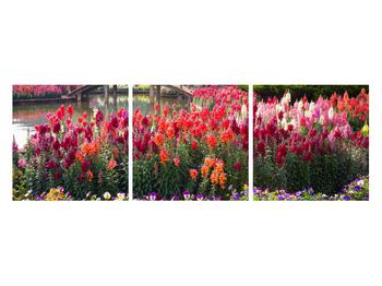 Obraz kvetín (K012048K12040)