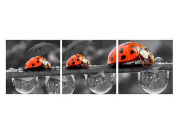 Obraz lienok sedembodkových s dáždnikmi (K012059K12040)