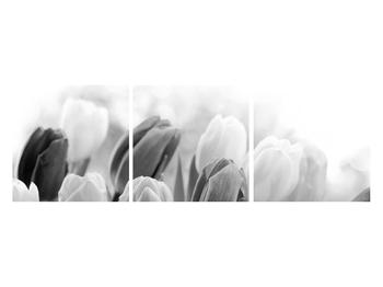 Černobílý obraz pučících tulipánů (K012127K12040)