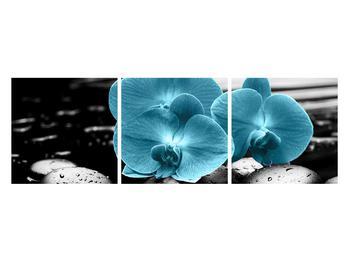 Tablou cu flori de orhidee albastre (K012398K12040)