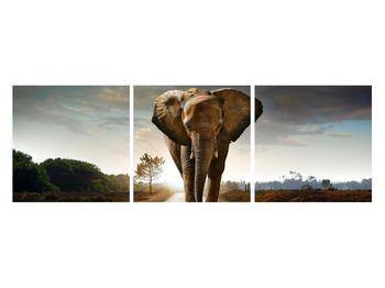 Tablou cu elefant (K012479K12040)