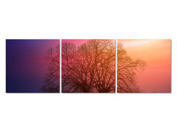 Obraz stromov v hmle (V020088V12040)