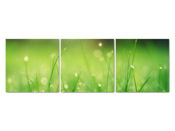 Obraz - rosa na tráve (V020169V12040)