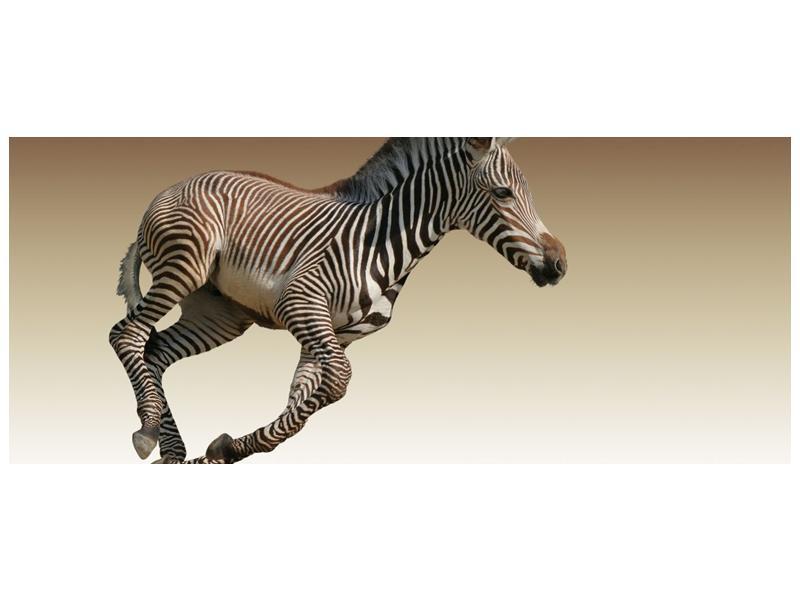 Obraz běžící zebry (F002416F12050)