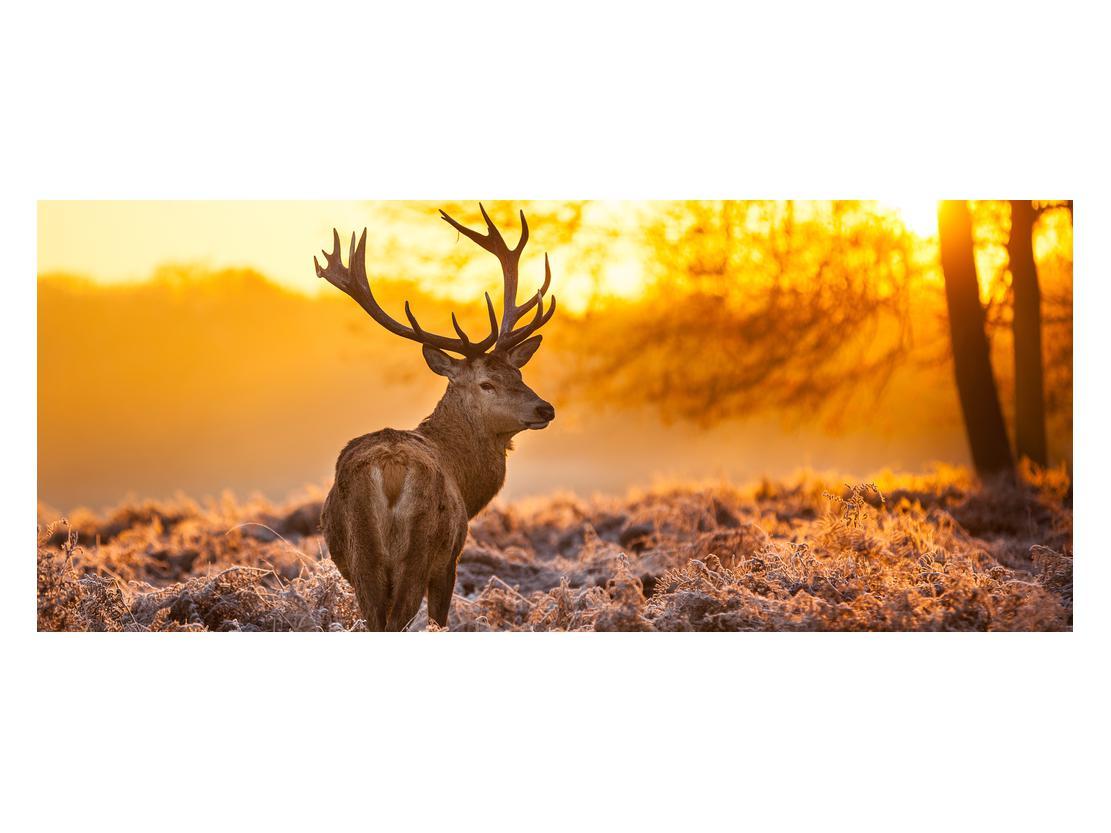 Slika jelena (K011281K12050)