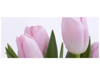 Obraz růžových tulipánů (F000389F12050)
