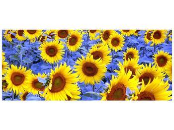 Obraz slunečnic (F000619F12050)