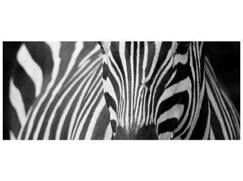 Obraz černobílého detailu zebry (F000715F12050)